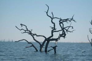 Dead-trees-Kariba-bkgrd